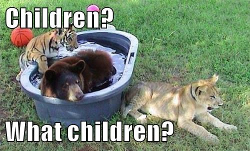 animals children bear pool Cats