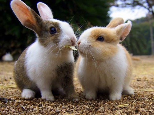 cute baby animal Care To Share Your Nibbles?