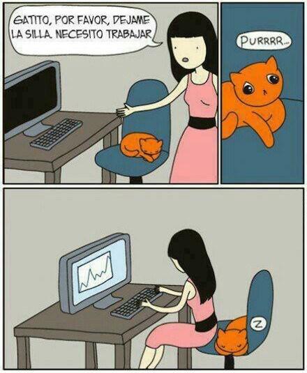 gato quitate