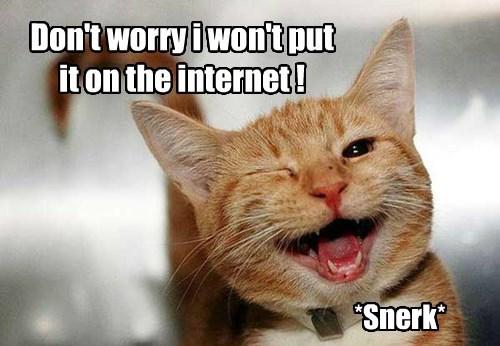 internet trust Cats - 8485581568