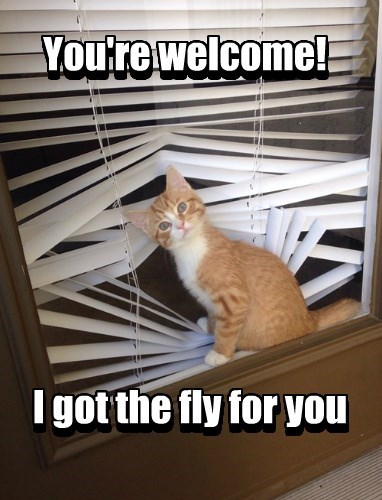 fly,blinds,Cats