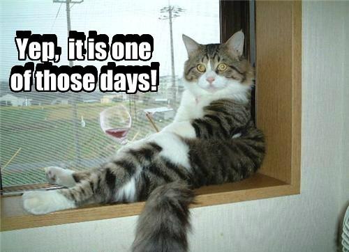 wine Cats - 8485590016