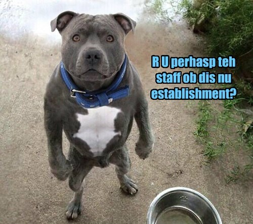 Cheezburger Image 8485598464