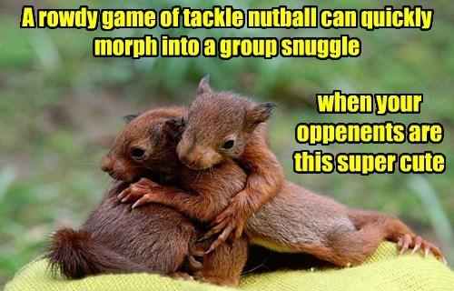 cuddle squirrel cute - 8485737472