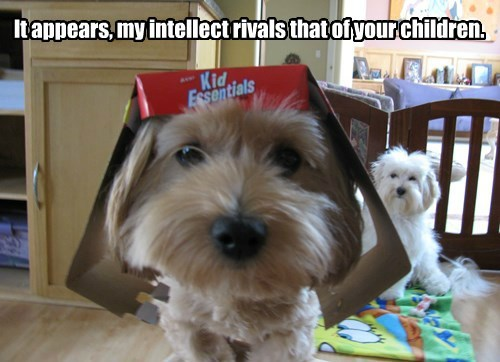 dogs,kids