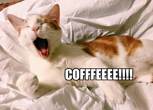 coffee,Cats