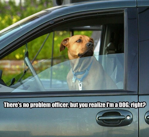 There's no problem officer, but you realize I'm a DOG, right?