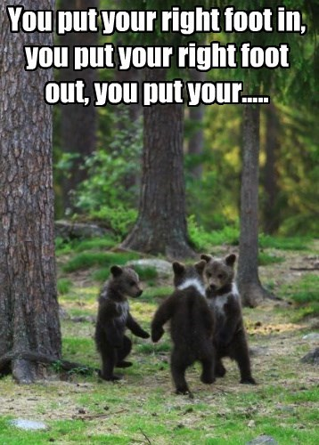 bears cute cubs - 8485758208