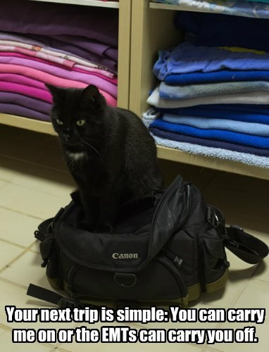 cat bag Travel - 8485758464