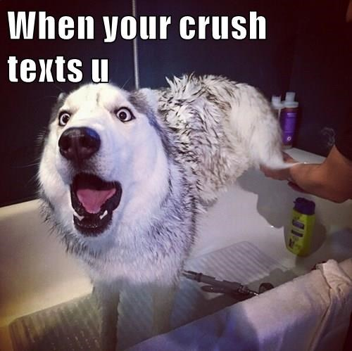 animals dogs text bath crush - 8485784832