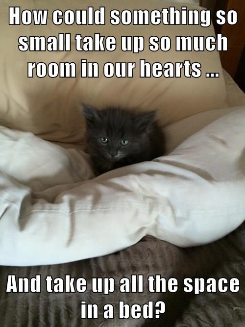 animals kitten cute Cats - 8485794304