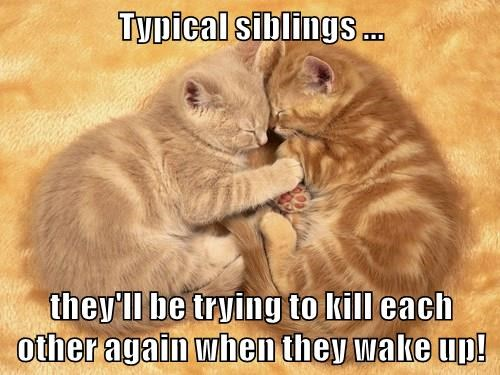 animals siblings kitten Cats - 8485800960