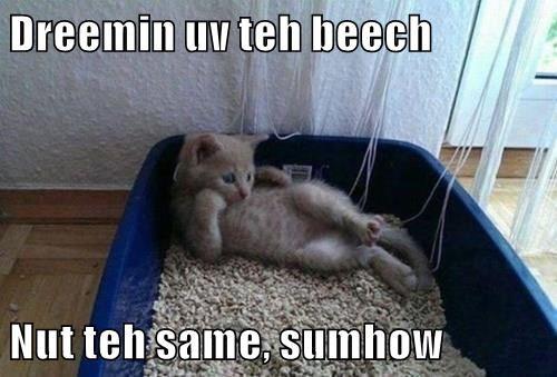 animals beach litter box Cats - 8485804800
