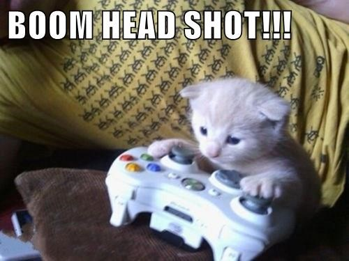 animals kitten cute head shot video games Cats - 8485836544