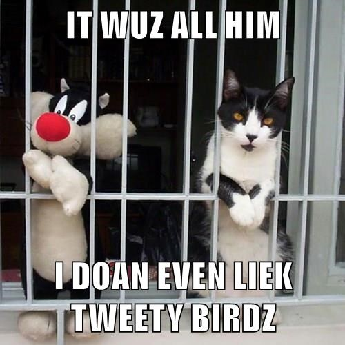 animals bars tweety bird Cats - 8485873664