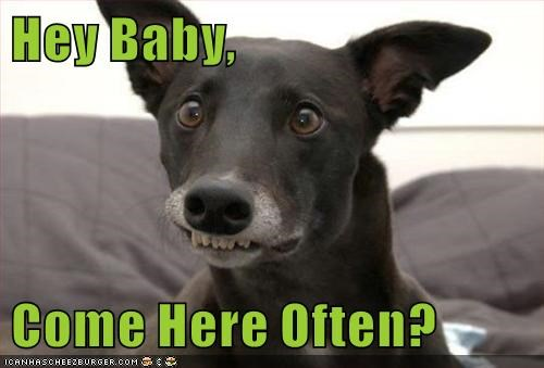 dogs,pick-up line