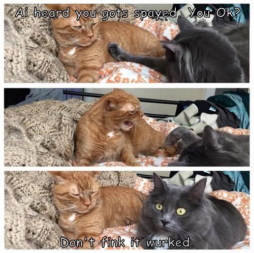 animals vet Cats - 8485955584
