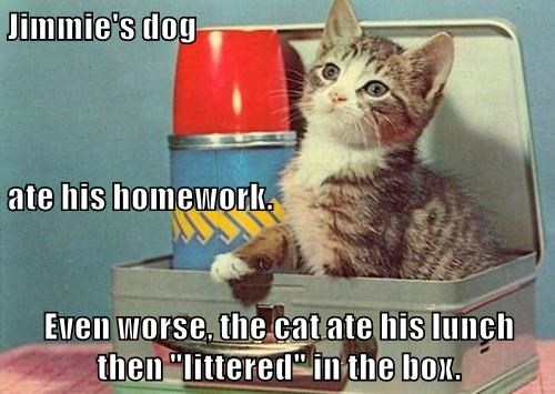 "Jimmie's dog ate his homework. Even worse, the cat ate his lunch then ""littered"" in the box."