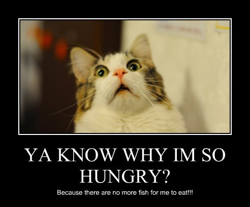 hungry treats Cats - 8486029824