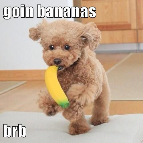 animals dogs banana cute - 8486041856