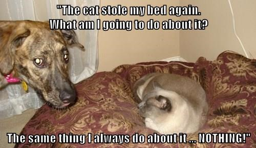 animals dogs bed Cats - 8486077696