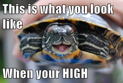high,cute,turtle