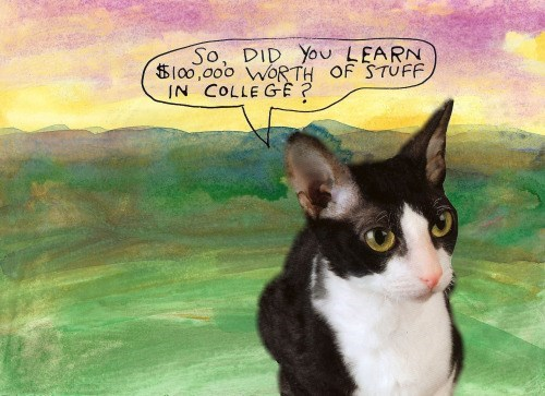 funny cat image art degrees are almost never worth it