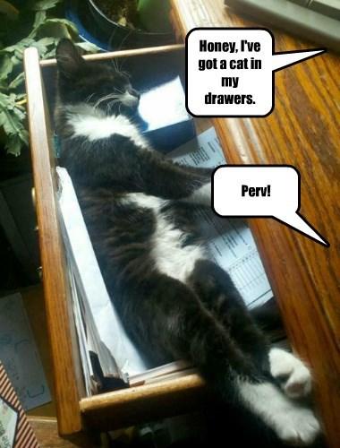 Honey, I've got a cat in my drawers.
