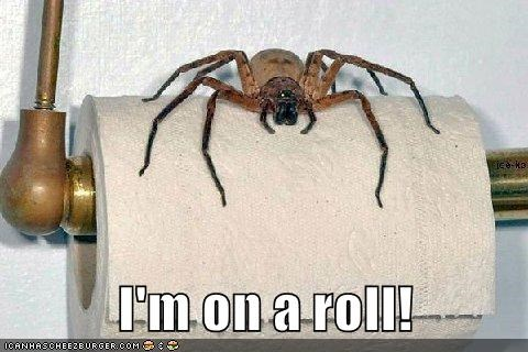 spiders,captions,funny
