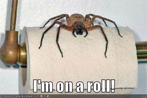 animals spiders captions funny - 8486929664
