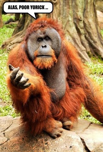 captions,orangutan,funny