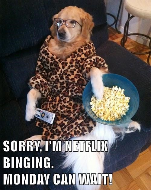 binging,dogs,netflix
