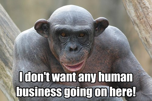 chimpanzee captions funny - 8487969792