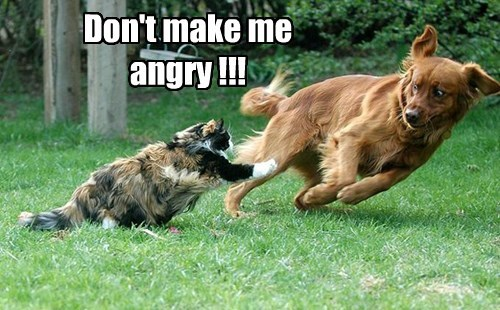 Don't make me angry !!!