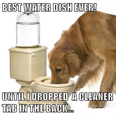 BEST WATER DISH EVER! UNTIL I DROPPED A CLEANER TAB IN THE BACK...