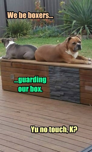We be boxers... ...guarding our box. Yu no touch, K?