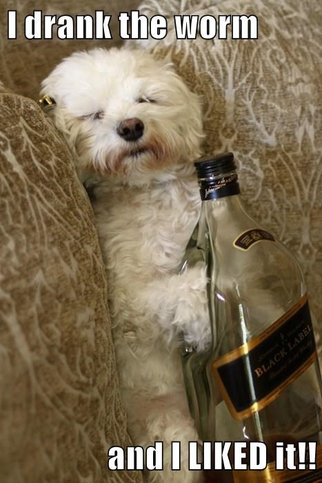 animals drinking dogs Party meme funny image