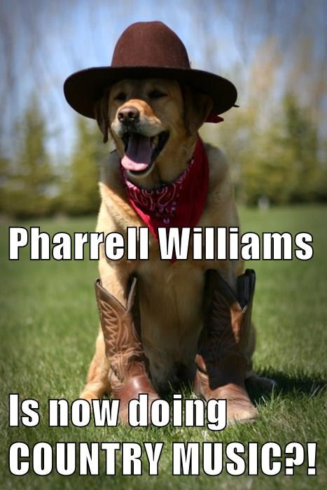 animals dogs Music pharrell williams country - 8488732928