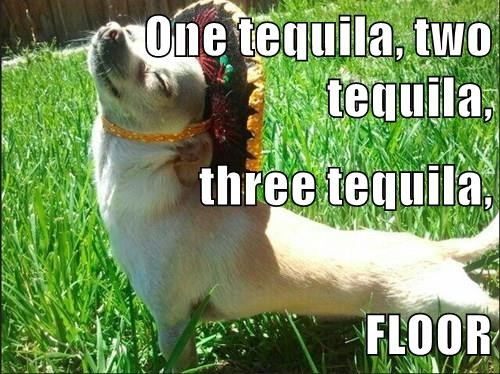 animals drinking dogs meme funny image - 8488904960