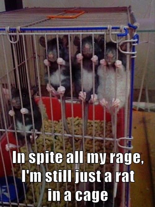 In spite all my rage, I'm still just a rat in a cage