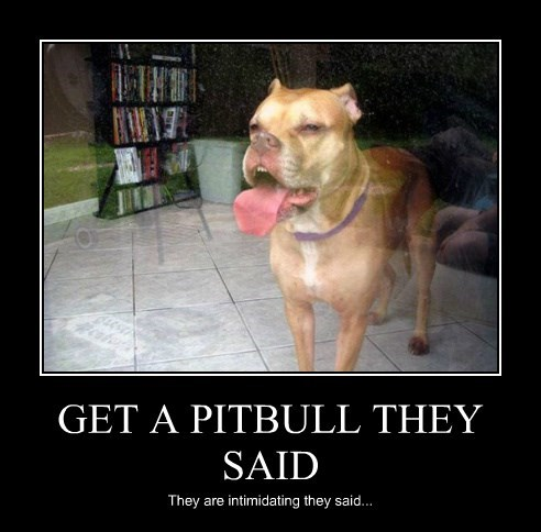 dogs,pitbull,licking,glass door
