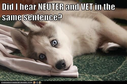 animals dogs neuter vet