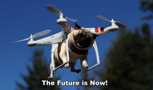 funny dog photo drone pug of the future