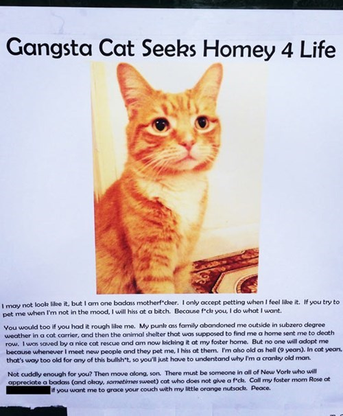 funny cat poster gangsta cat seeks homey for life
