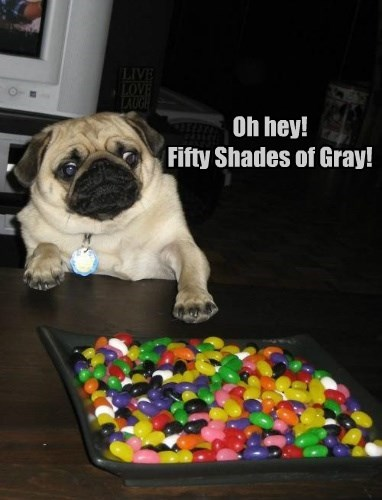balls,dogs,toys,50 shades of gray