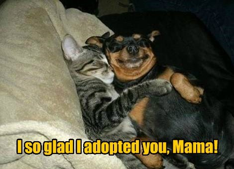 dogs,mothers day,adopted,cute-BFFs,Cats