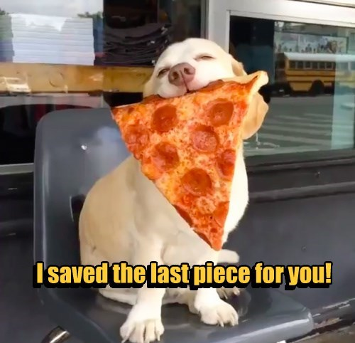 dogs sharing pizza - 8489636864