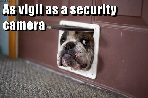animals doggie door dogs security bulldog - 8489680128