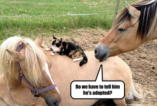 captions horses funny - 8489940992