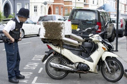 funny-news-fail-pizza-bees-delivery-bike